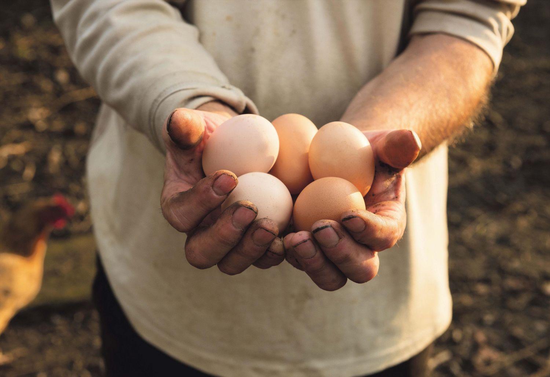 Eier werden in der Hand gehalten. Thema: Nachhaltige Landwirtschaft