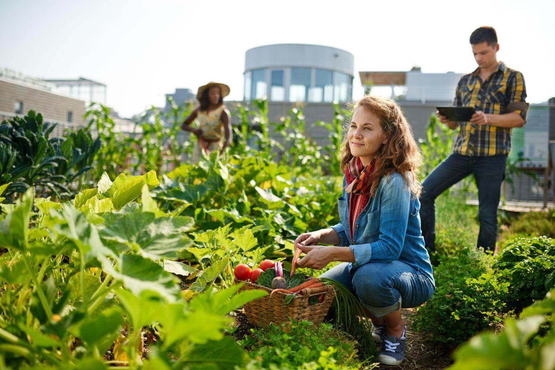 Junge Menschen gärtnern auf einem städtischen Acker. Thema: Nachhaltigkeit