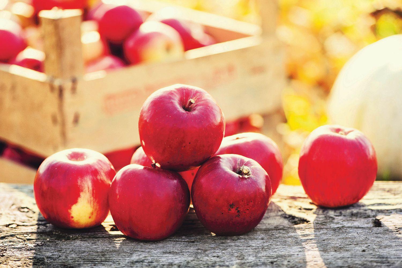 Rote Äpfel vor einem Korb. Thema: Regionale Lebensmittel